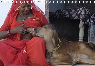 Zvířata A Lidé