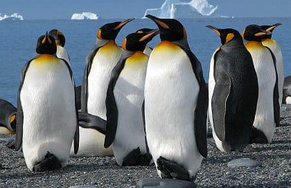 Stres Tučňáků